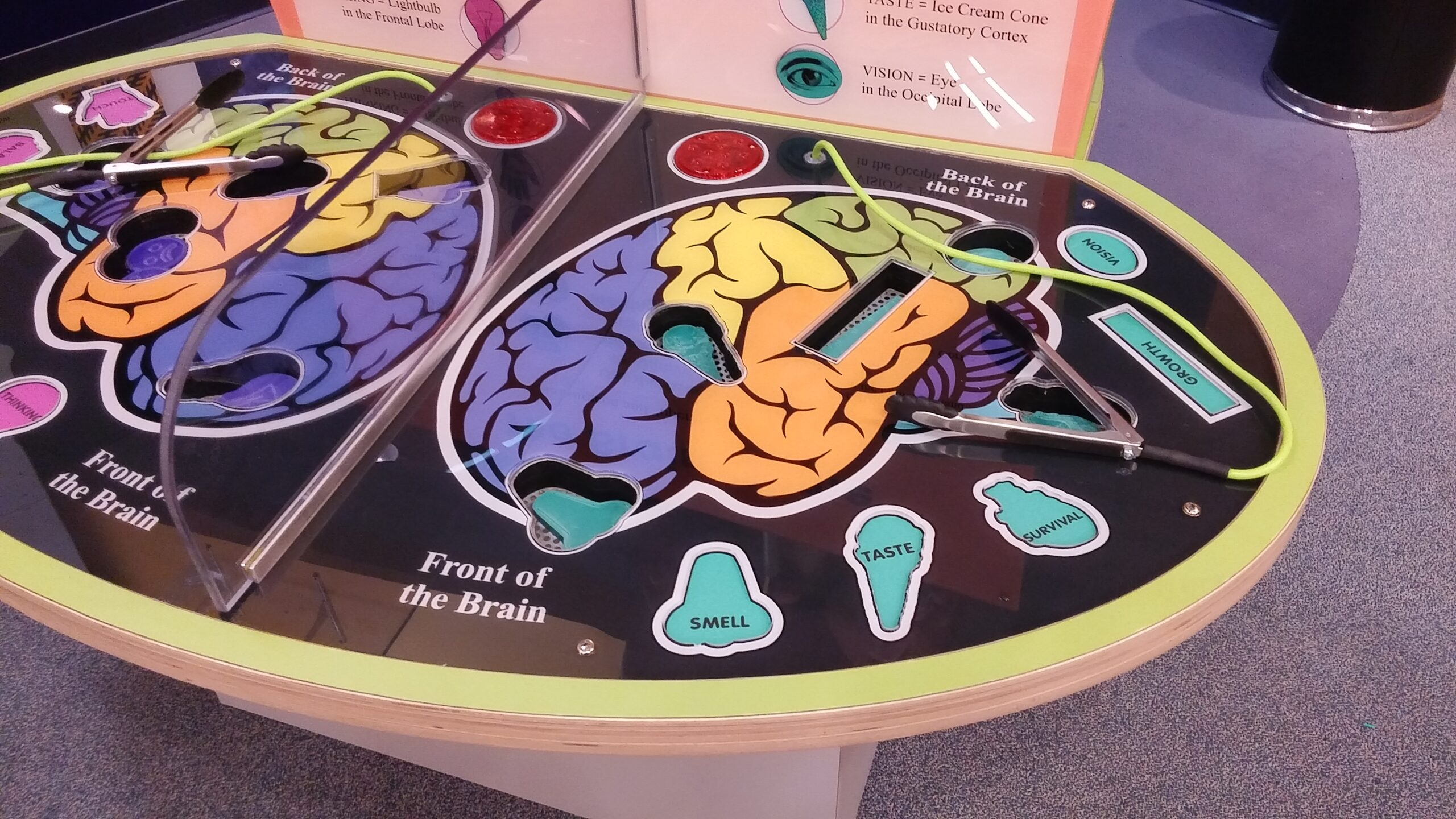 Detail of Brain Operation Game.
