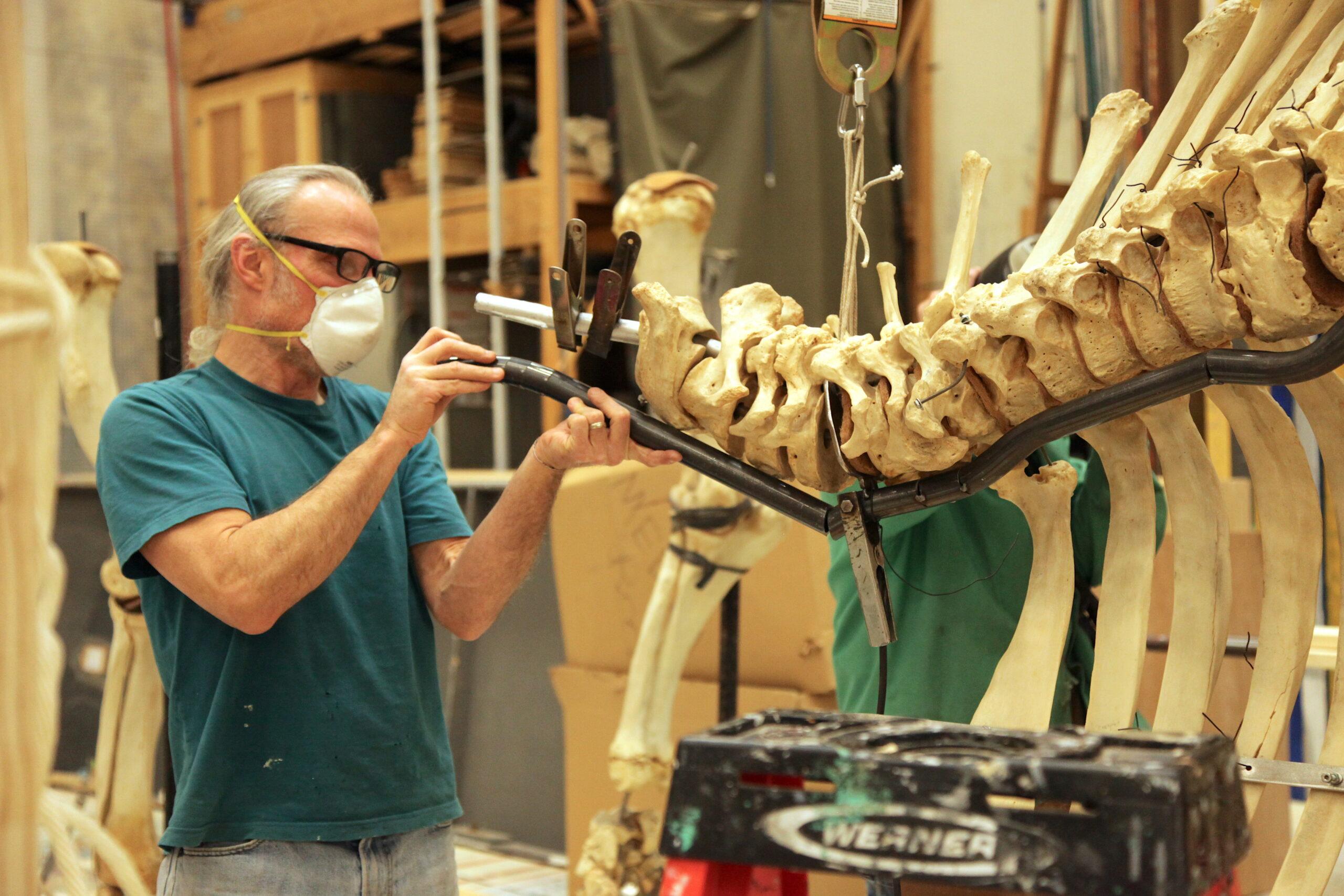 Fabricating the elephant skeleton mount.