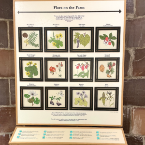 Flora on the Farm Interactive Exhibit