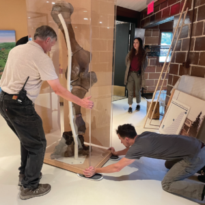 F&W installing a mastodon leg with the help of Pat McKay, director of the Rochester Hills Museum..